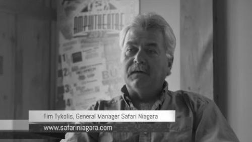 LAC Client Testimonial - Tim Tykolis Owner Safari Niagara